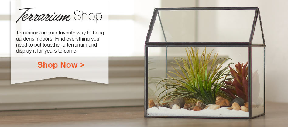 Shop Our Terrarium Collection Now