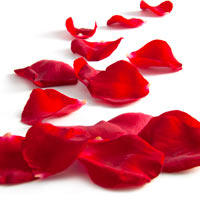 Silk Leaves and Rose Petals