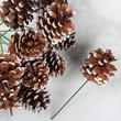 Snowy Natural Pinecone Picks