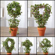 Potted Artificial Ivy and Grapevine Plant