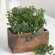 Artificial Boxwood Picks