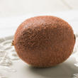Realistic Artificial Kiwi Fruit from Winward Floral