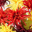 Yellow, Red, and Byzantine Artificial Spider Mum Bush