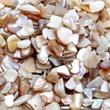 Natural Crushed Sea Shells