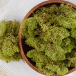 Natural Preserved Spring Green Reindeer Moss