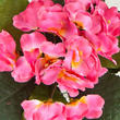 Beauty Pink Artificial African Violet Bush