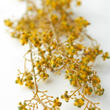 Yellow Artificial Wildflower Stem