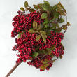 Red Artificial Berry and Leaf Bush