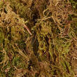 Dried Natural Green Tree Moss