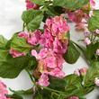 Pink Artificial Geranium Garland