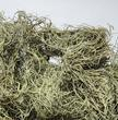 Light Green Dried Spanish Moss