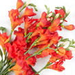 Orange Artificial Freesia Bush