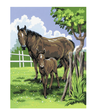 Horse Painting By Numbers Kid's Craft Kit