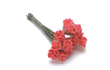 Miniature Large Coral Carnation Stems