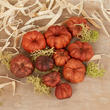 Natural Dried Putka Pod Mini Pumpkins