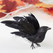 Flying Artificial Crow