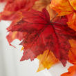 Red Orange Autumn Artificial Maple Leaf Spray