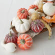 Assorted Harvest White and Frosted Pumpkins and Gourds