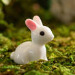 Miniature White Bunny