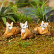 Miniature Foxes