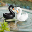 Miniature Black and White Swans