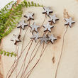 Silver Wood Star Picks