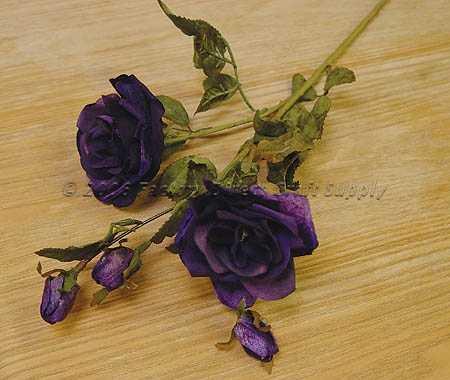 Purple Velvet Touch Open Roses X 2 Single Stem Bushes