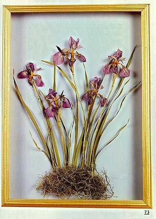 Dried flower crafts book dried floral arranging craft for Dried flowers for crafts
