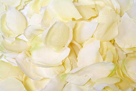 Silk Flower Wholesale on Bulk Artificial Flower Petals  Wholesale Silk Rose Petals Bulk