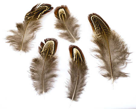 Shower decorations party favors ideas - Natural Almond Pheasant Body Plumage Feathers Feathers Amp Boas