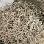 Natural Dried Spanish Moss