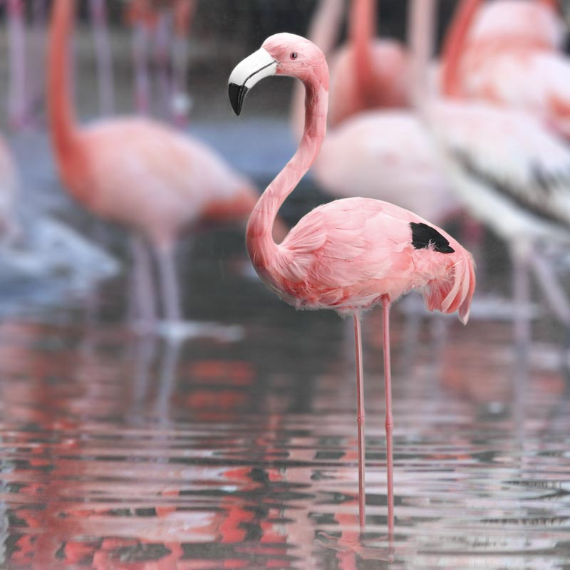 22 artificial feathered pink flamingo with head up