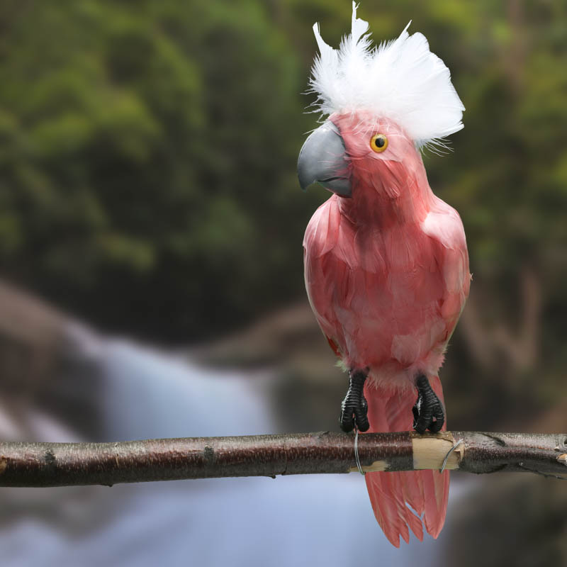 Large pink feathered artificial cockatoo birds for Feathered birds for crafts