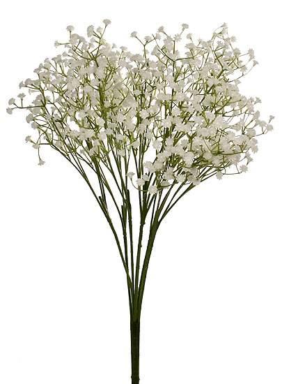 White Gypsophila Baby S Breath Bush Bushes Bouquets