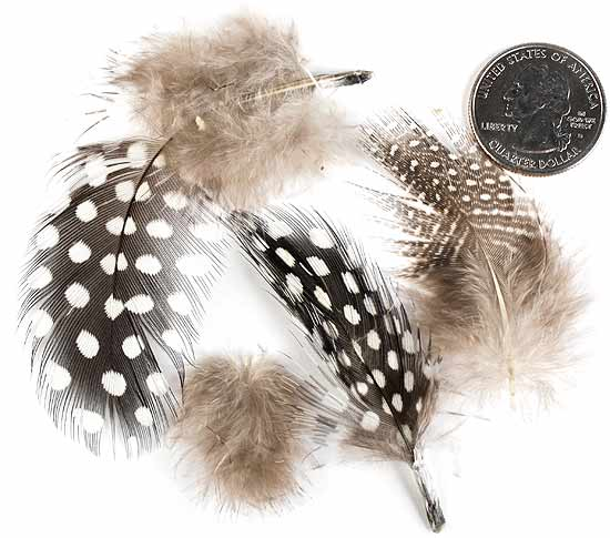 Brown guinea feathers feathers boas basic craft for Where can i buy feathers for crafts