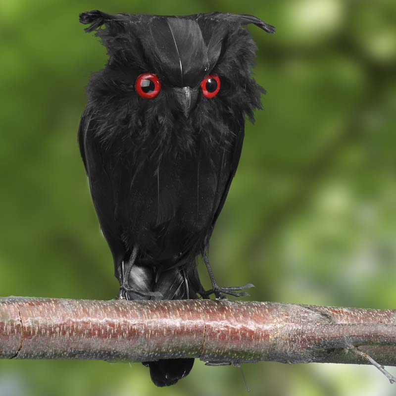 Black Feathered Artificial Owl