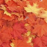 Assorted Fall Maple Leaves