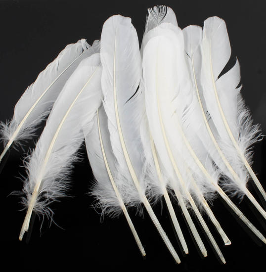 White natural loose goose quill feathers feathers boas for Natural feathers for crafts