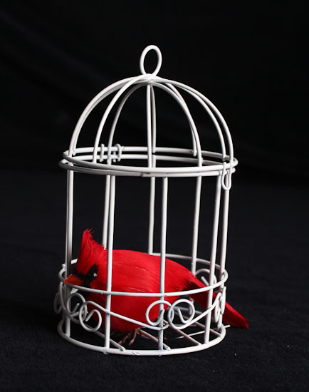 Set Of 3 Small White Wire Bird Cages Birds Amp Butterflies
