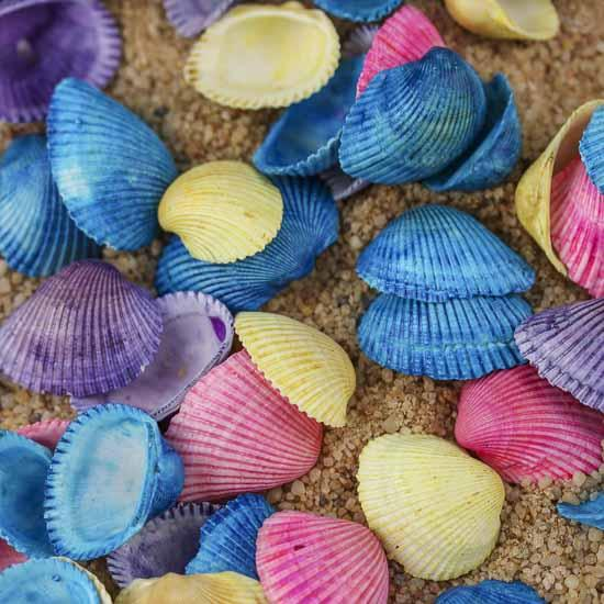 Colorful Seashells 3.5oz colorful clam seashells