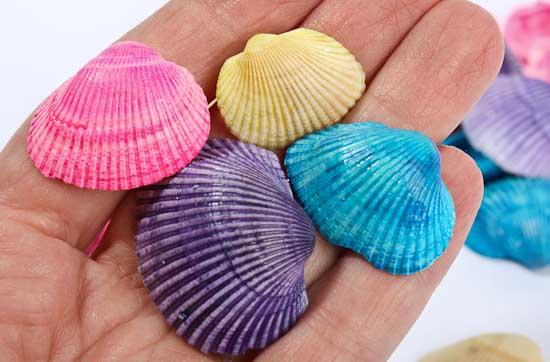 colorful clam seashells - coastal decor