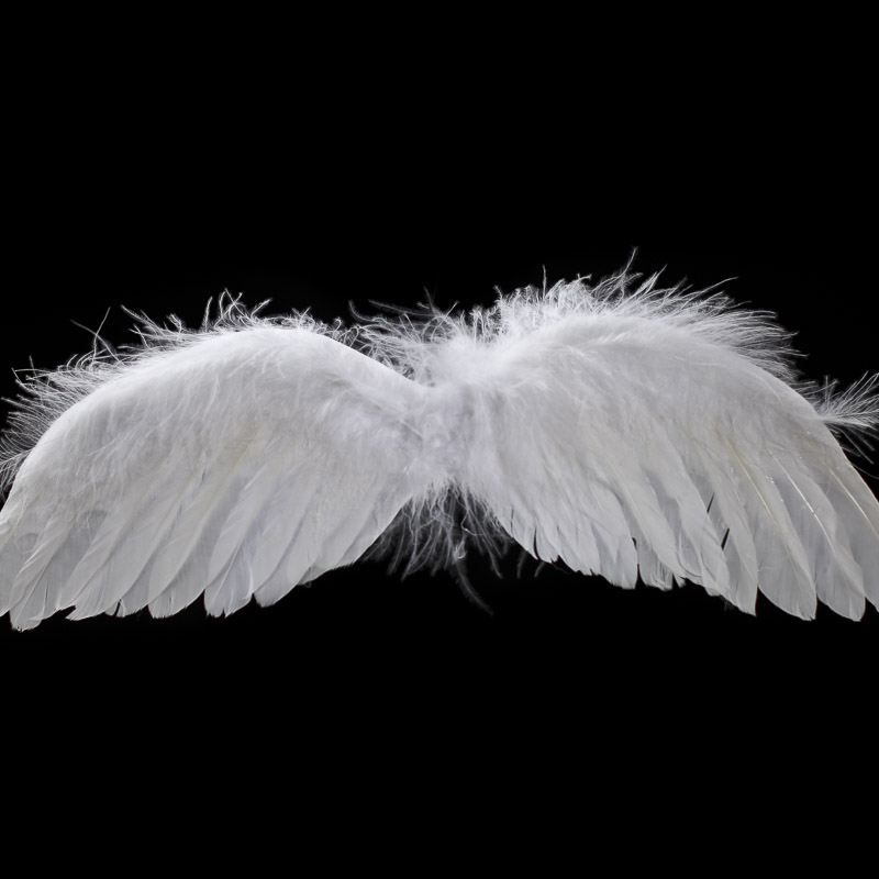 Real white feather angel wings angel wings doll making for Where to buy craft feathers