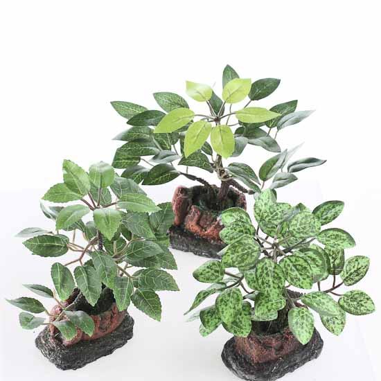 Assorted Miniature Potted Plants Set Of 6 Fairy Garden