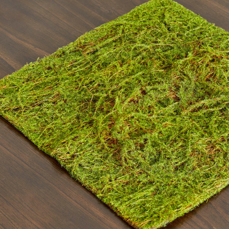Green Water Sphagnum Moss Sheet Drieds Natural