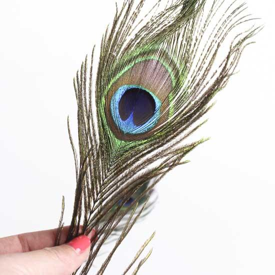 Natural peacock feathers feathers boas basic craft for Natural feathers for crafts