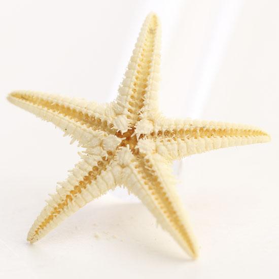 Micro Miniature Natural Starfish Shells Coastal Decor
