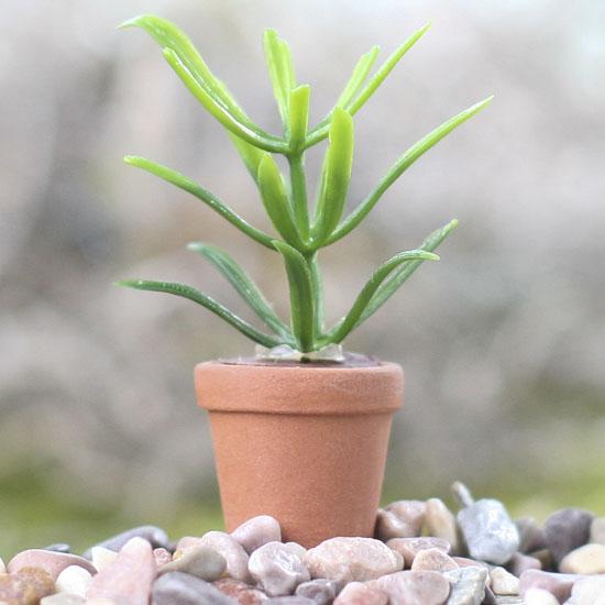 Miniature House Plant Miniature Plants Dollhouse