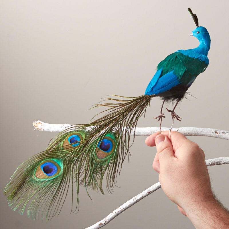 Closed tail feathered artificial peacock birds for Feathered birds for crafts