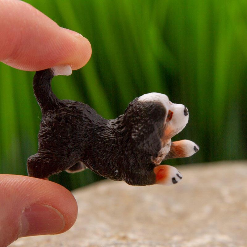 Miniature Bernese Mountain Dog Puppy