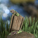Miniature Grasshoppers